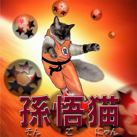 孫悟猫最終.jpg